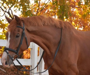 autumn, beauty, and chestnut image