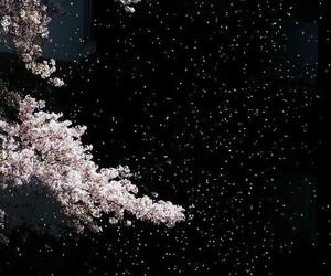 night, sakura, and japan image