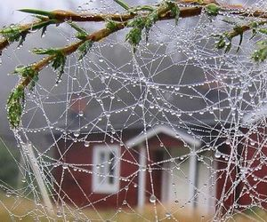 dew, rain, and spiderweb image