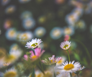 flower and spring image