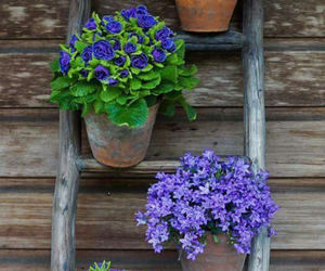 outdoors, garden decoration, and beautiful image