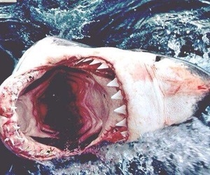 shark, ocean, and blood image