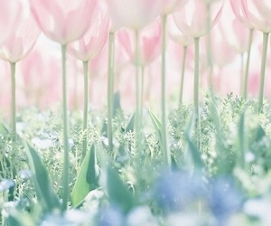 spring, flowers, and pastel image