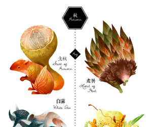 animals, autumn, and raccoon image
