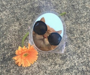 cat, aesthetic, and mirror image