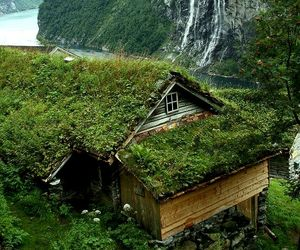green, nature, and roof image