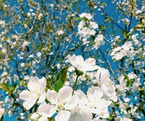 april, blue, and spring image
