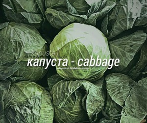 cabbage, quotes, and dictionary image