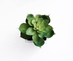 cactus, green, and minimal image