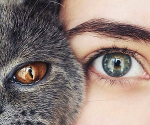 eyes, cat, and animal image