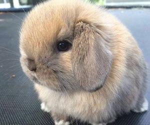 animal, bunny, and cute image