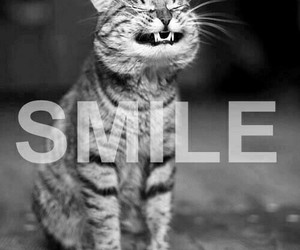cat, smile, and smile cat image