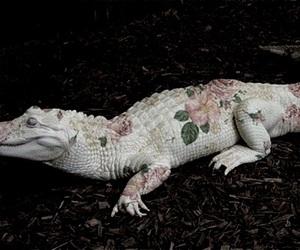 animal, crocodile, and alligator image