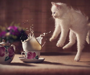 cat, milk, and kitten image