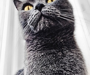 cat, cats, and eyes image