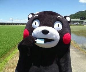 kumamon image