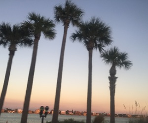 aesthetic, florida, and beach image