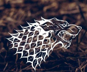 stark and wolf image