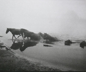 horses, water, and stallions image