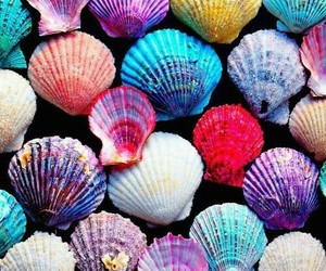 shells, background, and color image