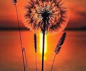 flores, dientes de leon, and deseos image