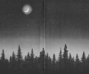 black and white, forest, and stars image