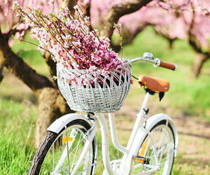 flowers, spring, and bike image