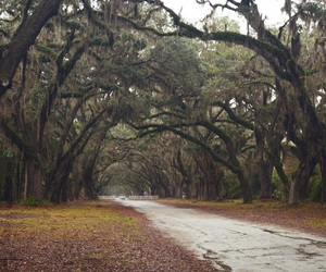 dark, nature, and southern gothic image