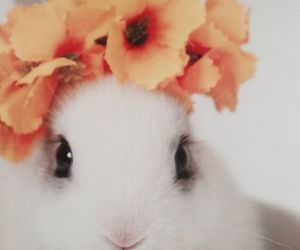 rabbit, cute, and flowers image