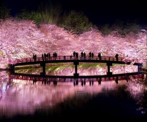 sakura, beautiful, and flowers image
