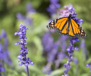 butterflies, flowers, and nature image