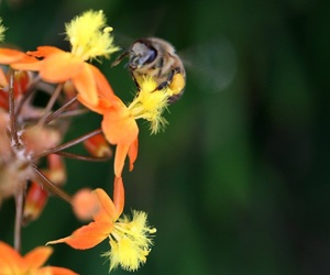 beautiful, pollinators, and bee image