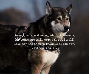 bible, quote, and dog image