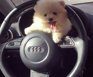 car, animal, and audi image