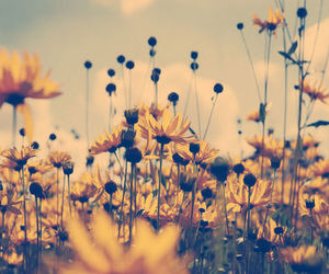 flowers, yellow, and vintage image