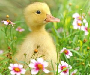Chick, easter, and cute image