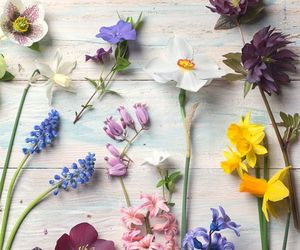 blooms, flowers, and spring image
