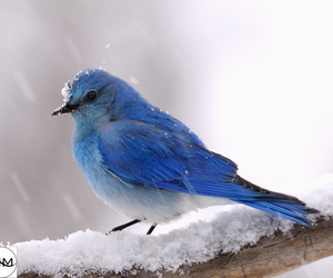 cute, bird, and snow image
