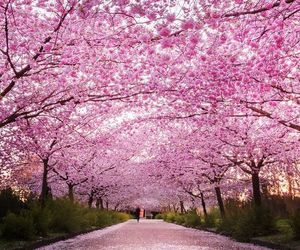 cherry blossom, gorgeous, and easter image