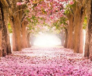 beautiful, cherry blossom, and pretty image