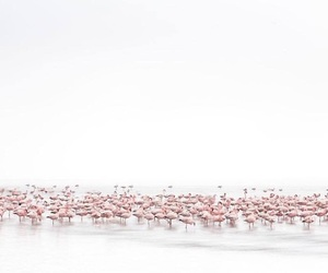 flamingo, grey, and pink image