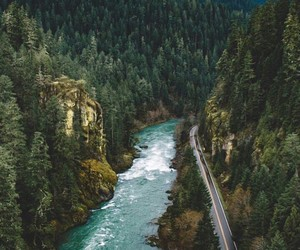 nature, water, and trees image