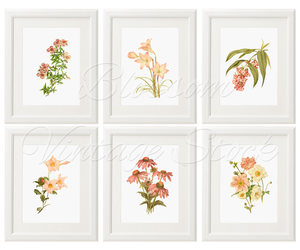 etsy, floral, and illustration image