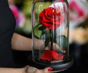 rose, flowers, and beauty and the beast image