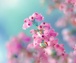 blue, colors, and flowers image