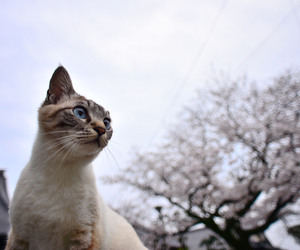 cat, cats, and japan image