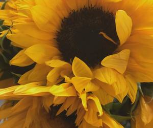 flowers, aesthetic, and sunflower image