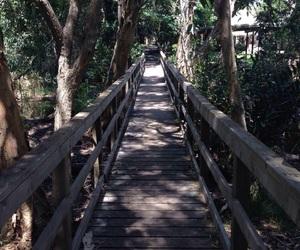 bridge, greenery, and nature image