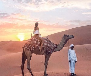 camel, sun, and travel image