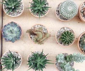cactus, clean, and plant image